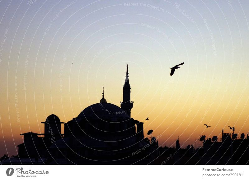 Dusk in Istanbul. Town Port City Downtown Skyline Roof Tourist Attraction Mosque House of worship Minaret Bird Sunset Summer Tradition Culture Turkey Prayer