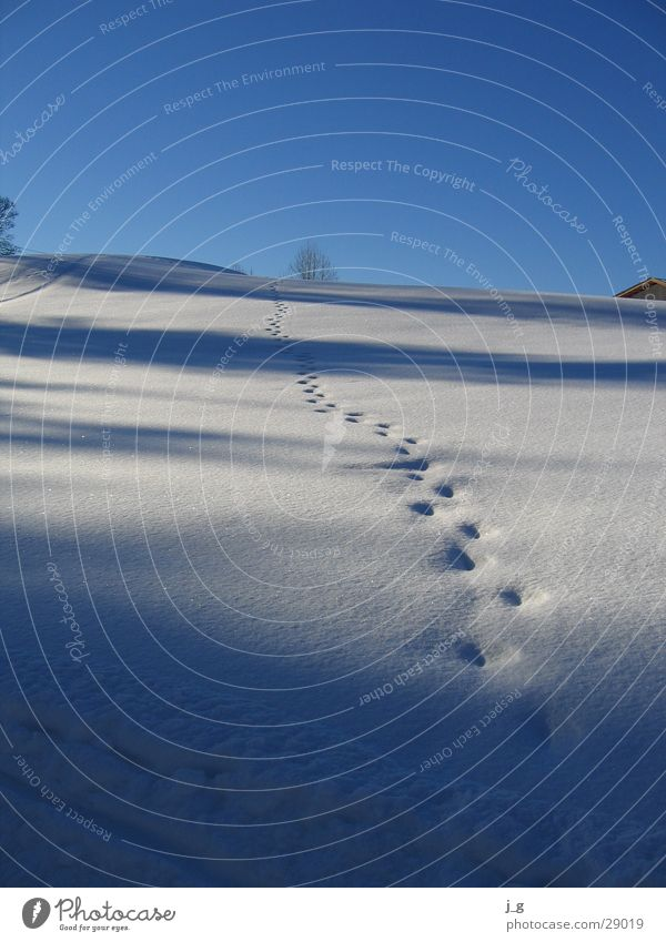 Tracks in the snow Winter Hill Winter's day Slope Cold Mountain Snow reither kogel tyrol white Lanes & trails