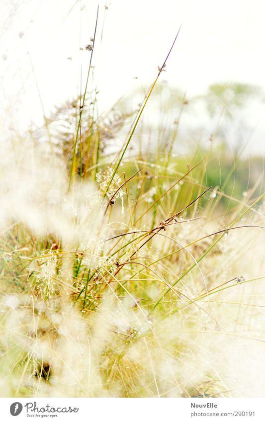Nature Plant Animal Landscape Environment Autumn Death Grass Sadness Rain Field Fog Bushes Grief Foliage plant Scotland