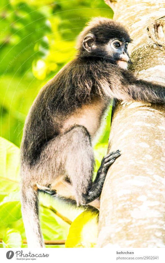 Vacation & Travel Tree Animal Far-off places Tourism Exceptional Freedom Trip Wild animal Adventure Fantastic Cute To hold on Tree trunk Asia Wanderlust