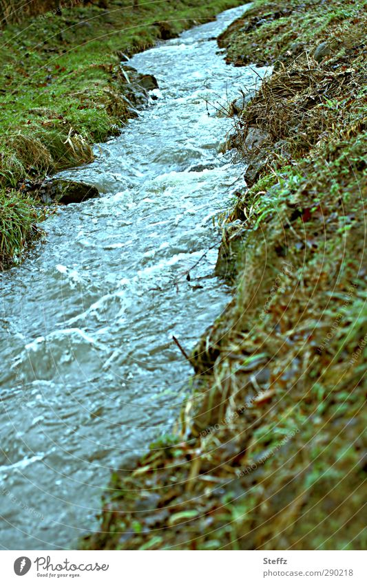 The sound of the stream Environment Nature Landscape Elements Water Grass Brook Body of water Banks of a brook Beautiful Blue Movement Change Blue-green River