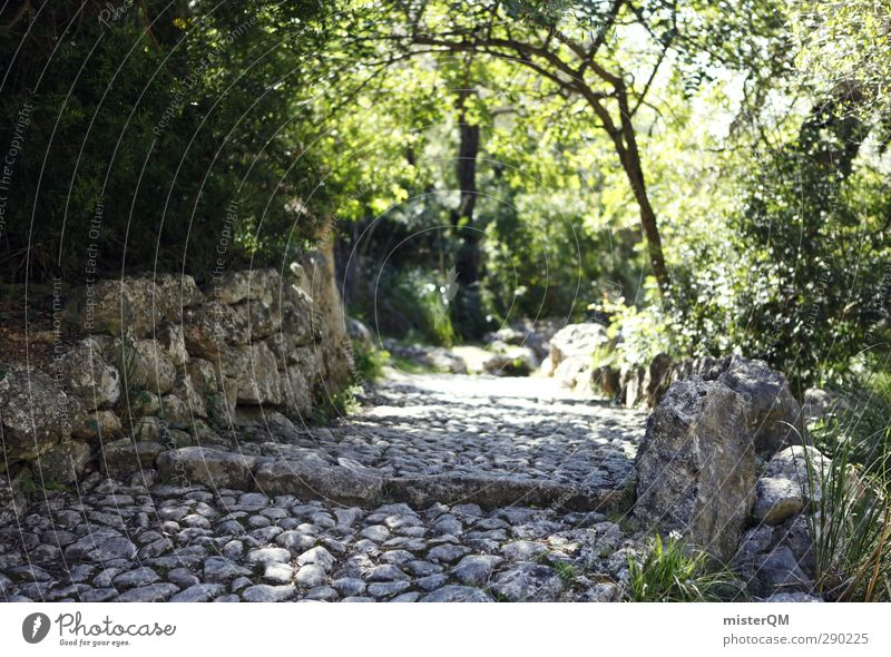On Old Paths. Nature Esthetic Hiking Lanes & trails Clearing Wayside Mediterranean Pilgrim Stone Exterior shot Spain Majorca Wall (barrier) Dreamily Surrealism
