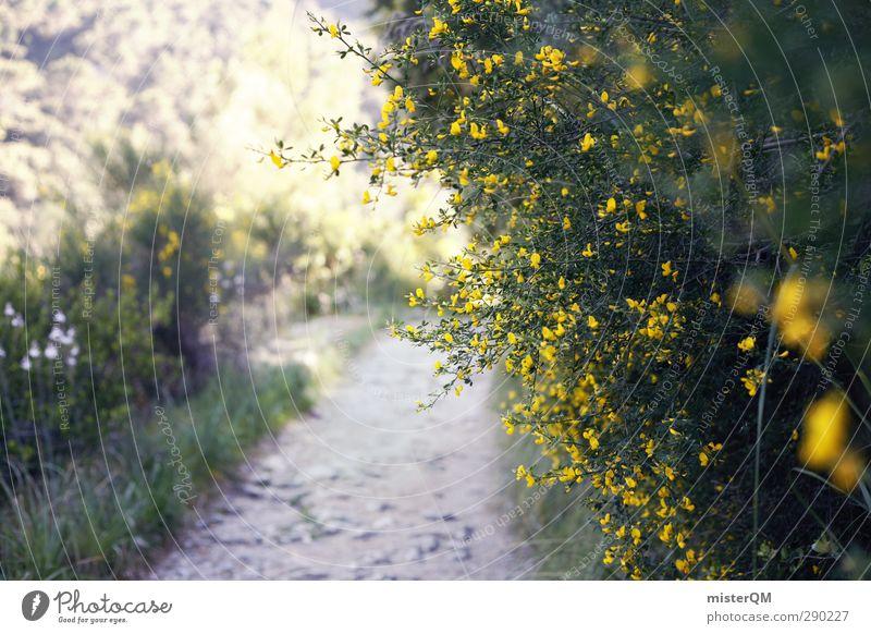 Hidden Valldemossa. Nature Landscape Plant Esthetic Lanes & trails Wayside Bushes Shabby Mediterranean Pilgrim Blossom Spain Majorca Blossoming Sunbeam Shadow