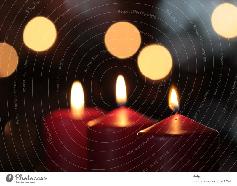 three burning red candles in front of a dark background with Bokeh Flat (apartment) Decoration Feasts & Celebrations Christmas & Advent shoulder stand Flame