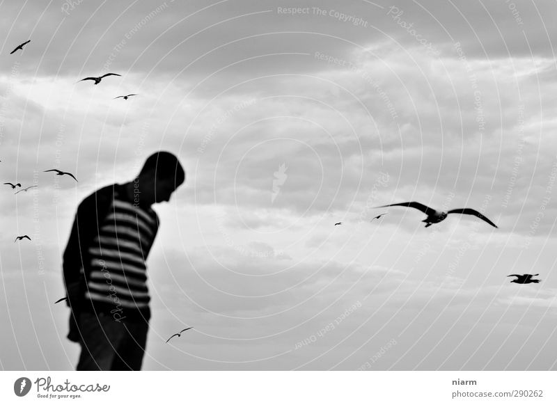 see gulls arriving Human being Masculine Young man Youth (Young adults) 13 - 18 years Child 18 - 30 years Adults Storm Wind Gale Animal Wild animal Seagull Bird