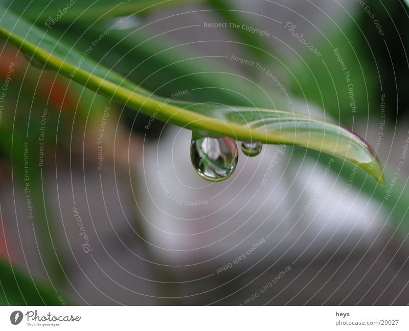 Water.drops Flower Rain Drops of water droplet