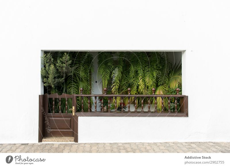 Green plants inside white house Plant Terrace House (Residential Structure) Entrance Leaf White Wall (building) Lanzarote Spain Clean Gate Growth Tropical