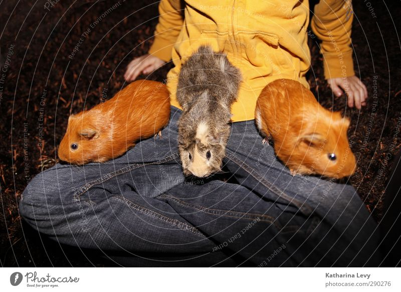 guinea pig all sorts Pants Sweater Jeans Animal Pet Animal face Pelt Petting zoo Rodent Guinea pig 3 Group of animals Animal family Small Natural Cute Blue