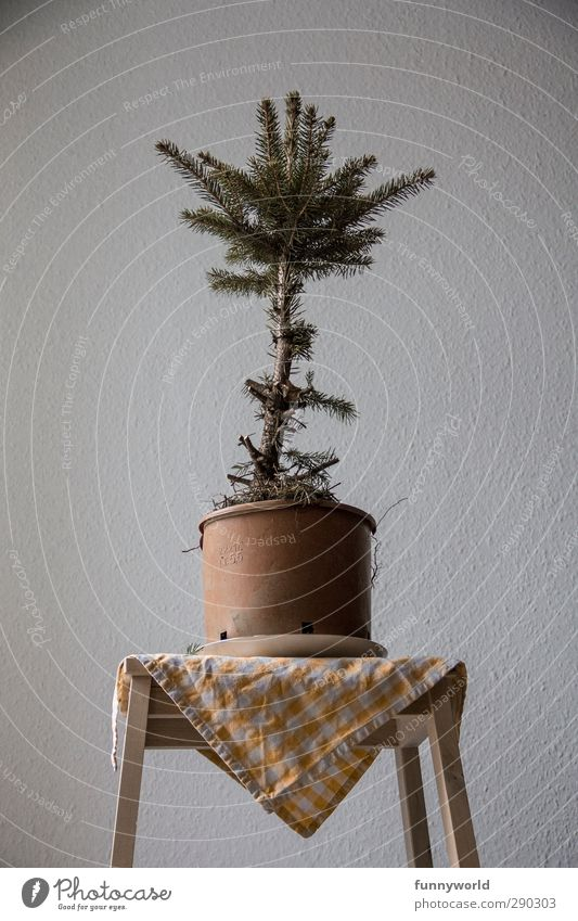 Old Christmas & Advent Tree Loneliness Sadness Anti-Christmas Broken Illness Christmas tree Fir tree Past Pot plant Health care