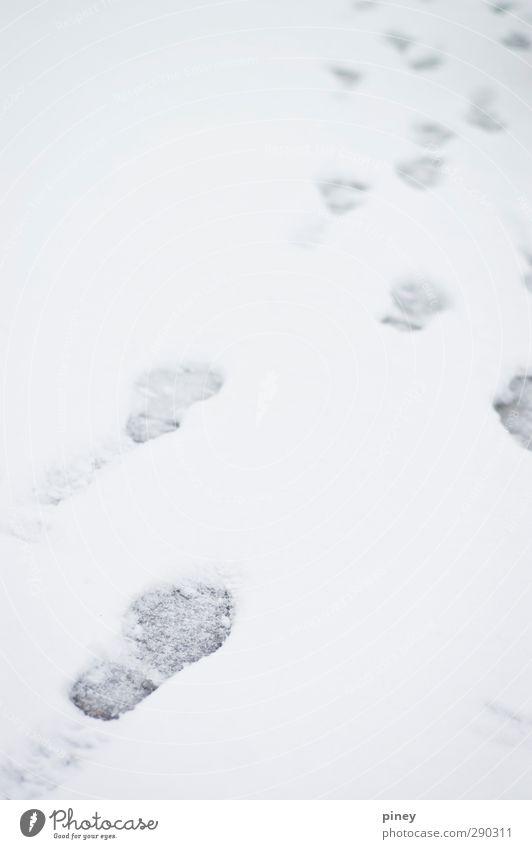 follow White Winter Cold Snow Gray Snowfall