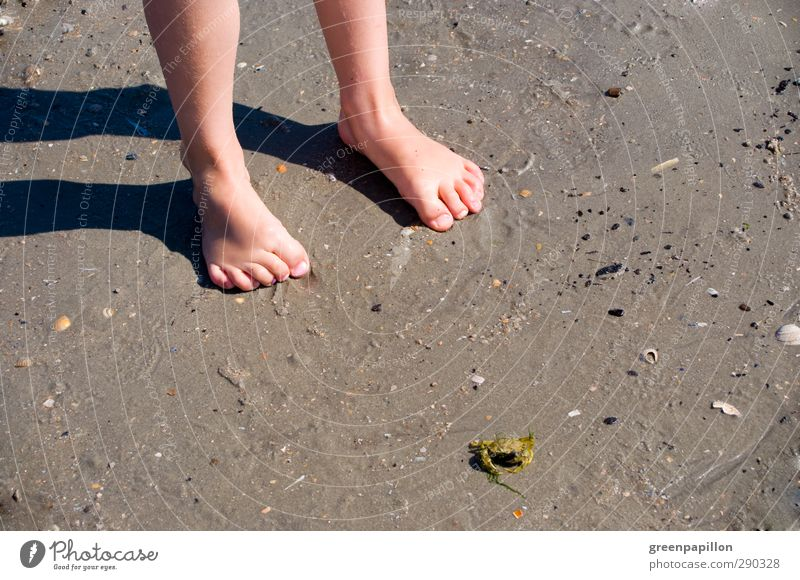 Children's feet on the beach Children's foot Beach Vacation & Travel Beach vacation Shrimp Mussel Girl Boy (child) Family outing Feet Barefoot Sand Toes Nail