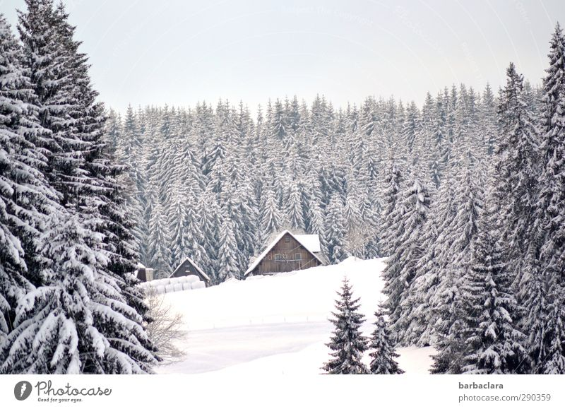 Black Forest idyll Nature Landscape Winter Beautiful weather Snow House (Residential Structure) Farm Agriculture Bright Cold White Moody