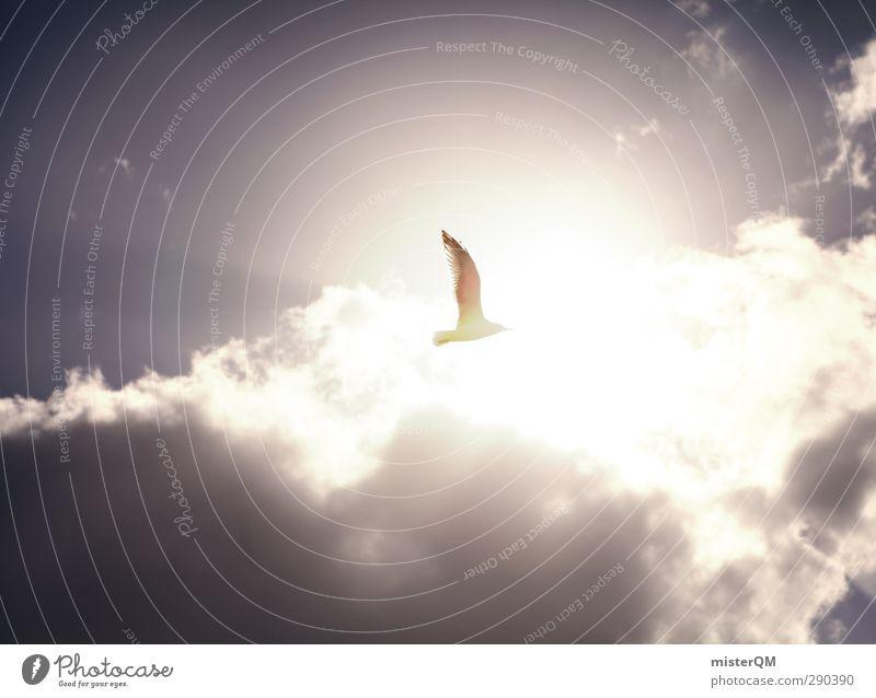 Sky Heaven Sun Clouds Coast Air Bird Art Flying Contentment Esthetic Symbols and metaphors Peace Seagull Ease Peaceful