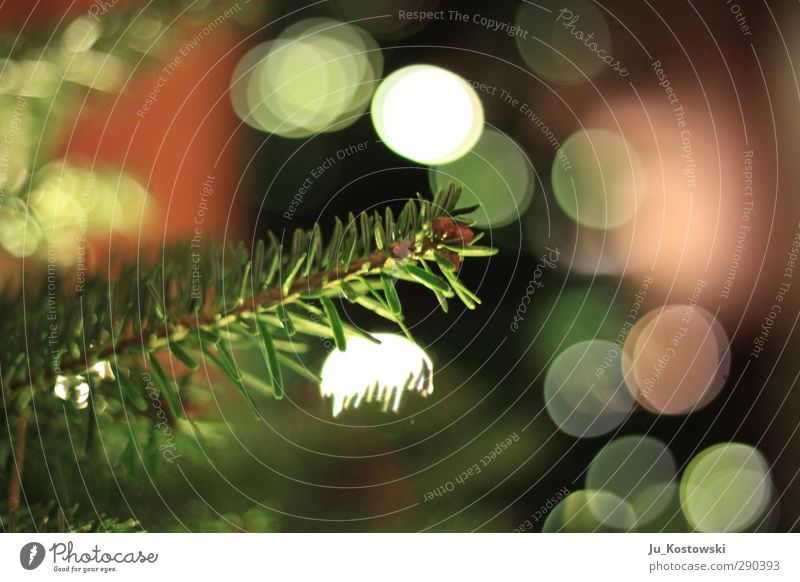 fir magic Environment Nature Plant Tree Conifer Christmas tree Discover Relaxation Feasts & Celebrations Glittering Illuminate Looking Dream Growth Fantastic