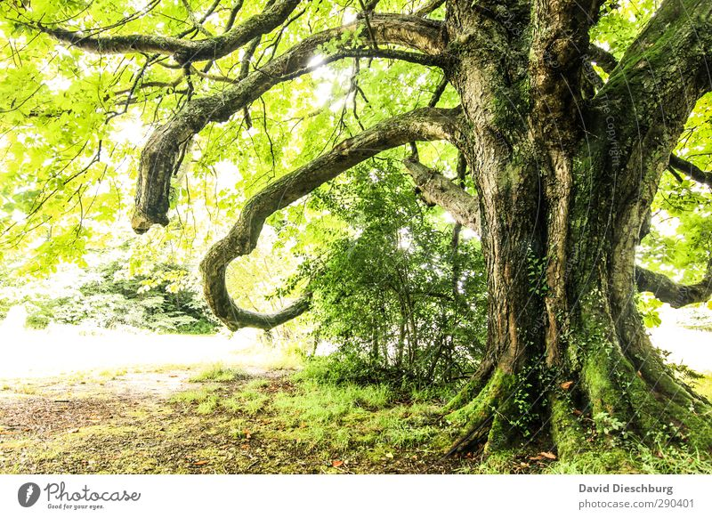 Nature Old Green White Summer Plant Tree Animal Leaf Landscape Black Forest Yellow Autumn Spring Garden