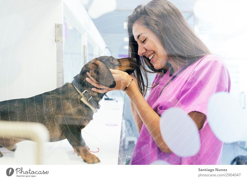 Veterinarian doctor hugging a beautiful dog. Woman Dog Tin veterinary clinic Animal Doctor Nurse Healthy Pet Uniform Professional Work and employment