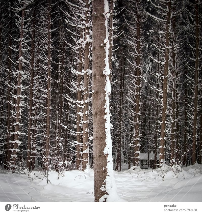 Undermanned the 1st row. Nature Landscape Winter Snow Tree Spruce forest Forest Digits and numbers Uniqueness Sustainability Naked Stagnating First Row of seats