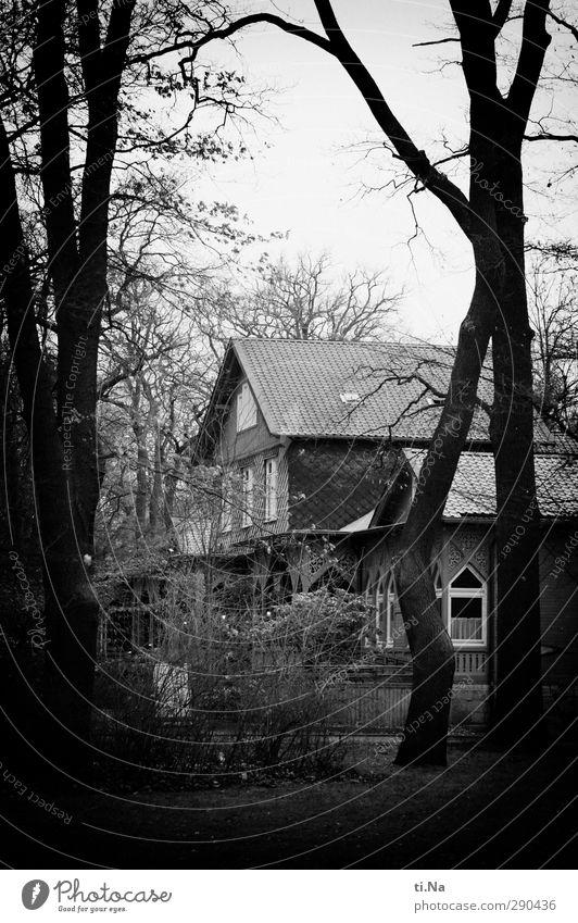 Brunswick Winter Bad weather Tree Park Braunschweig Dream house Living or residing Old Dark Creepy Gray Black Silver White Black & white photo Exterior shot Day