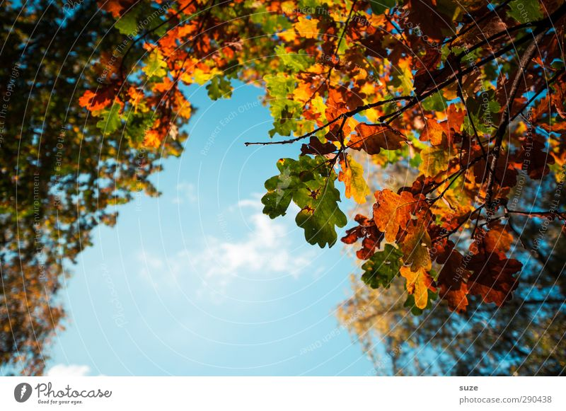 Sky Nature Blue Green Beautiful Plant Leaf Environment Autumn Natural Orange Beautiful weather Esthetic Seasons Twig Treetop