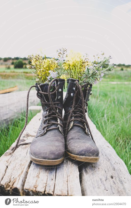 Old boots filled with flowers Lifestyle Style Garden Environment Nature Plant Spring Summer Flower Grass Blossom Wild plant Pot plant Boots Wood Fresh Cheap