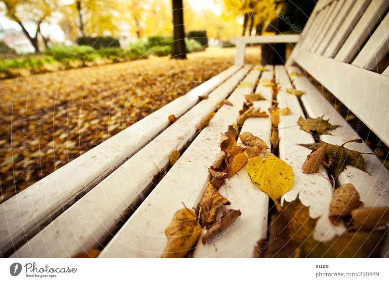 Undermanned. Take a seat. Environment Nature Autumn Weather Outskirts Park Wood Authentic Beautiful Yellow White Loneliness Break Calm Autumn leaves Autumnal