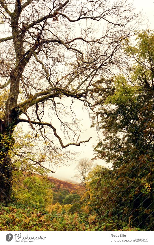 Rapture of the deep. Nature Landscape Weather Bad weather Fog Rain Tree Bushes Ivy Field Forest Hill Honest Scotland Colour photo Exterior shot Deserted Day