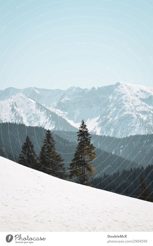 Alpine landscape with snow, firs and mountains Trip Far-off places Freedom Mountain Hiking Nature Landscape Air Sky Cloudless sky Beautiful weather Alps Peak