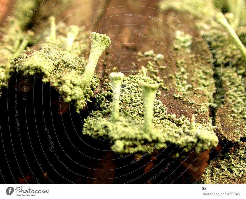 fungus Wood Tree bark Mushroom Putrefy Nature Macro (Extreme close-up)