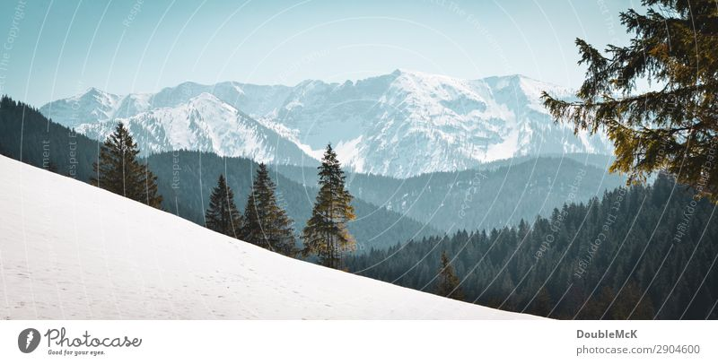 Alpine landscape with fir trees, snow and mountains Trip Far-off places Freedom Mountain Hiking Nature Landscape Air Sky Cloudless sky Beautiful weather Alps