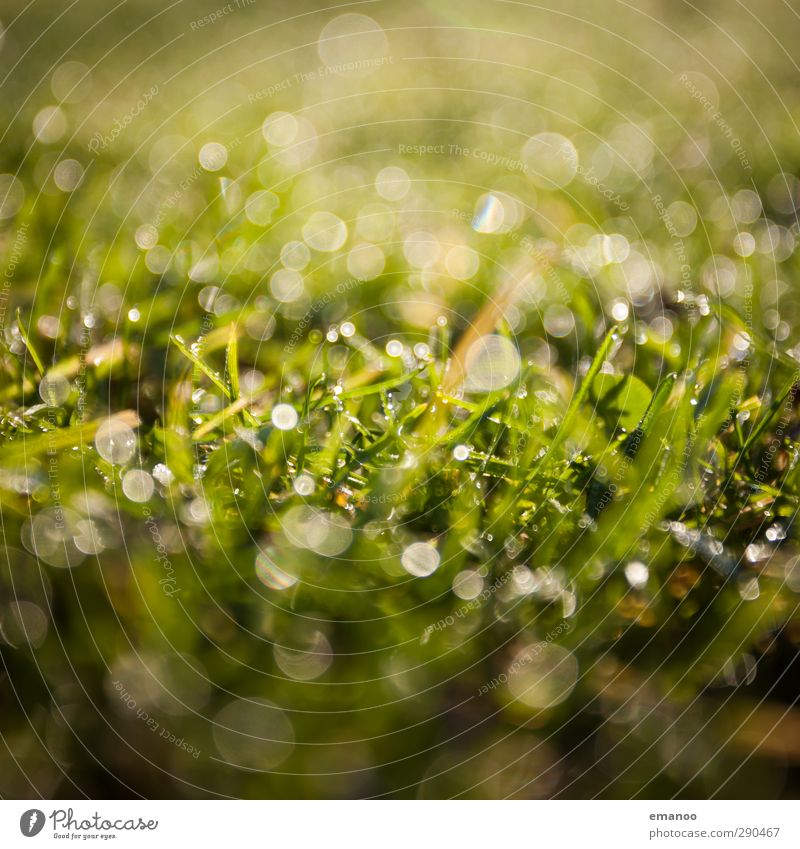 grassland Environment Nature Landscape Plant Water Drops of water Sunlight Spring Summer Climate Weather Rain Grass Bushes Foliage plant Garden Meadow Field