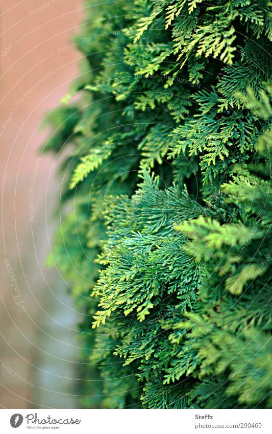 Nature Green Plant Landscape Leaf Environment Garden Park Arrangement Bushes Protection Seasons Fence Border Cut Forwards