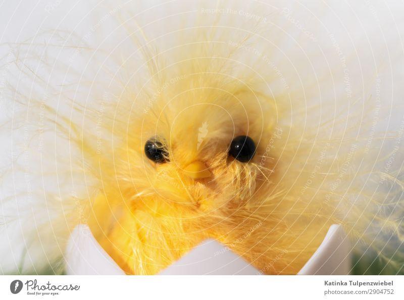 Nicht schon wieder Ostern Art Work of art Animal Pet Farm animal Bird Animal face 1 Toys Exceptional Fantastic Smart Yellow White Stress Anger Frustration Egg
