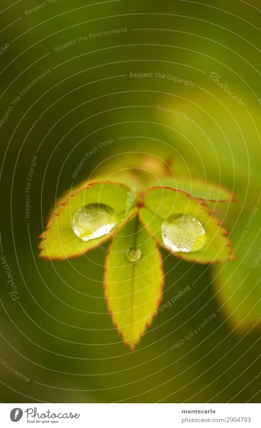 Nature Plant Green Leaf Environment Spring Natural Small Fresh Authentic Bushes Drops of water Uniqueness Wet Point Round