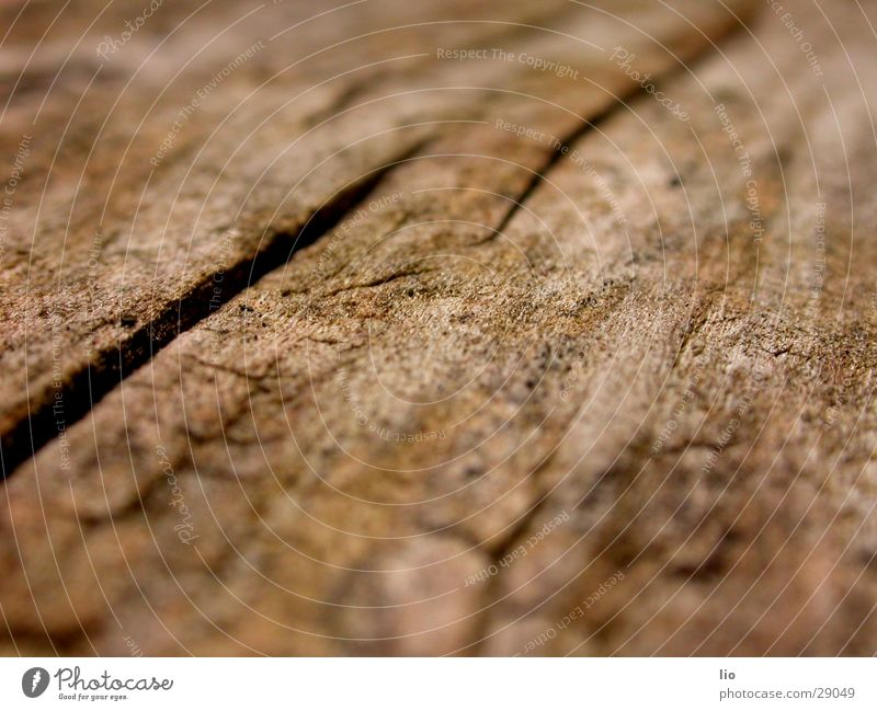 Wood Dry Tree trunk Crack & Rip & Tear Wood grain