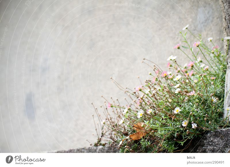 Nature White Summer Plant Flower House (Residential Structure) Environment Wall (building) Spring Wall (barrier) Blossom Garden Bright Rock Park Pink