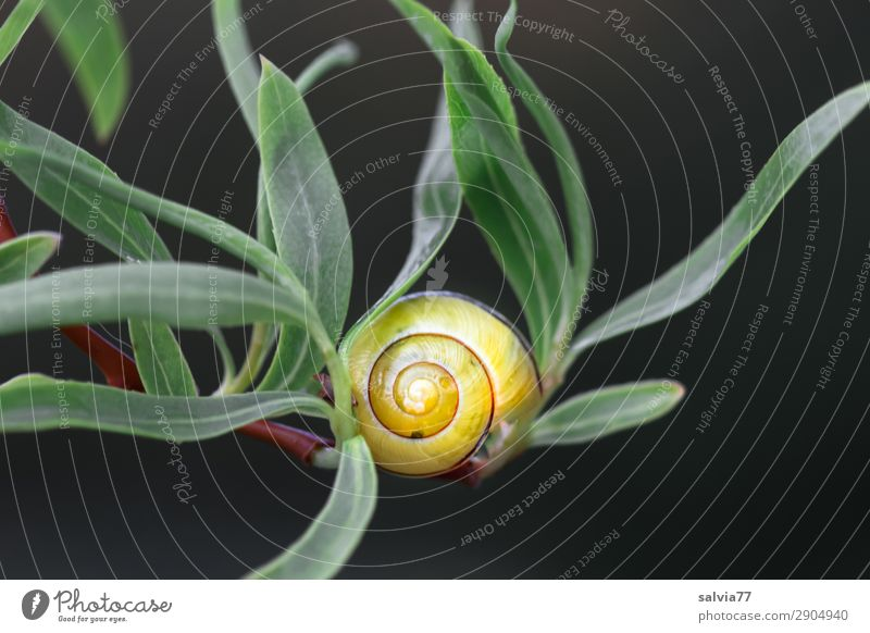 yellow cottage Environment Nature Plant Leaf Twig Pasture Animal Snail 1 Calm Protection Spiral Yellow Black Green Structures and shapes Contrast
