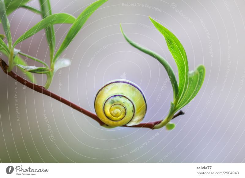 Nature Plant Animal Leaf Calm Environment Garden Pasture Twig Stress Snail Spiral