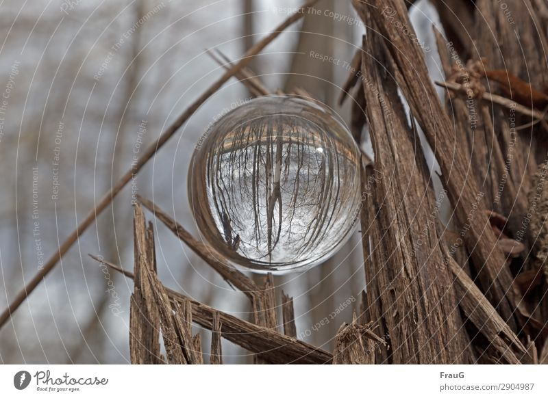 The forest is upside down Nature Spring Tree Forest Sphere Glass ball Wood Round Brown Refraction Log Colour photo Exterior shot Day