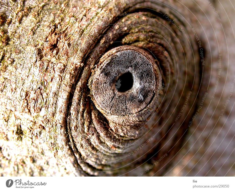 peephole Wood Brown Tree bark Branch Hollow Macro (Extreme close-up)