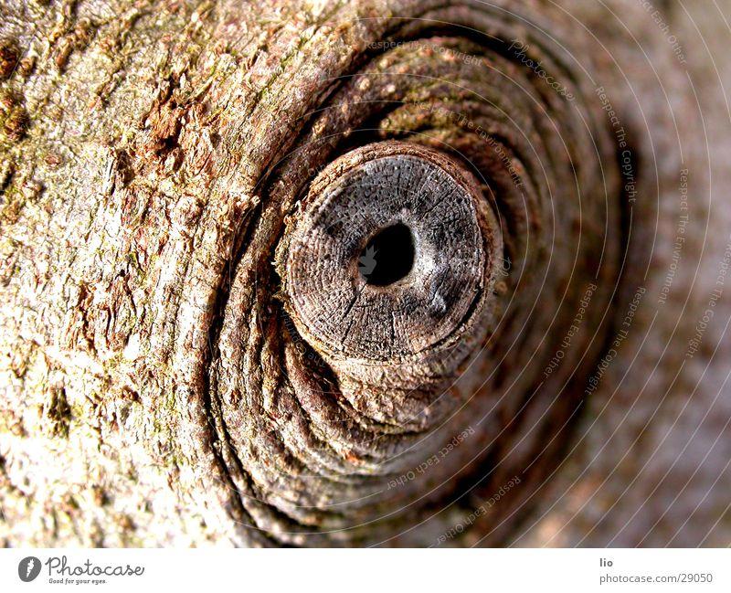 Wood Brown Branch Hollow Tree bark