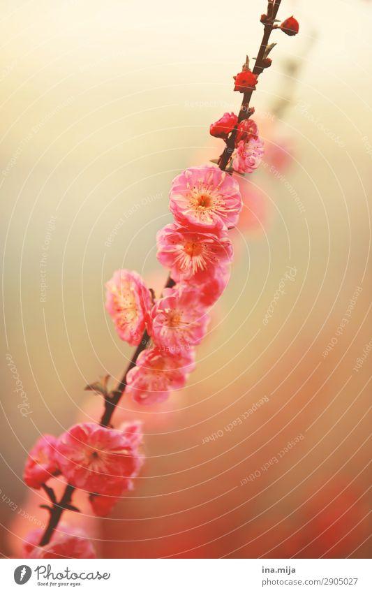 _ Environment Nature Plant Spring Summer Flower Bushes Blossom Esthetic Fragrance Beautiful Feminine Pink Colour Fiasco Optimism Pure Innocent Spring flower