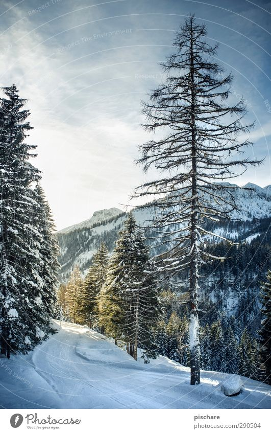 Nature Tree Forest Mountain Cold Snow Tourism