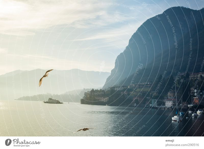 Sky Nature Landscape Environment Mountain Cold Rock Exceptional Weather Climate Hill Seagull Lake Como