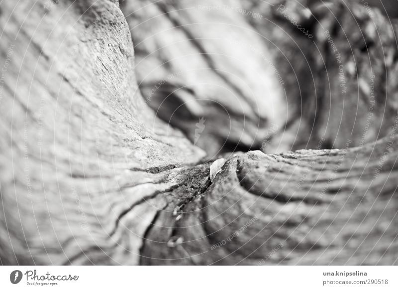 with verve Nature Landscape Tree Tree trunk Wood Natural Round Dry Brittle Curved Tree bark Black & white photo Exterior shot Close-up Detail Abstract Pattern