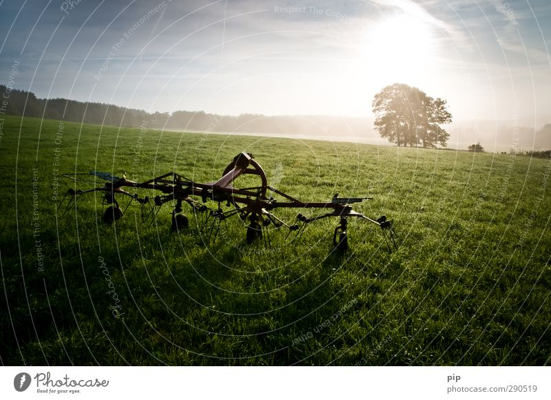 rotary tedder Agricultural machine Agriculture Environment Sun Summer Autumn Beautiful weather Tree Meadow Field Metal Fresh Bright Sustainability Rural