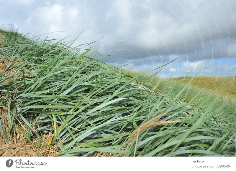 With the wind Environment Nature Landscape Plant Animal Sand Water Climate Weather Beautiful weather Grass Waves Coast Beach Hiking Free Blue Green Contentment