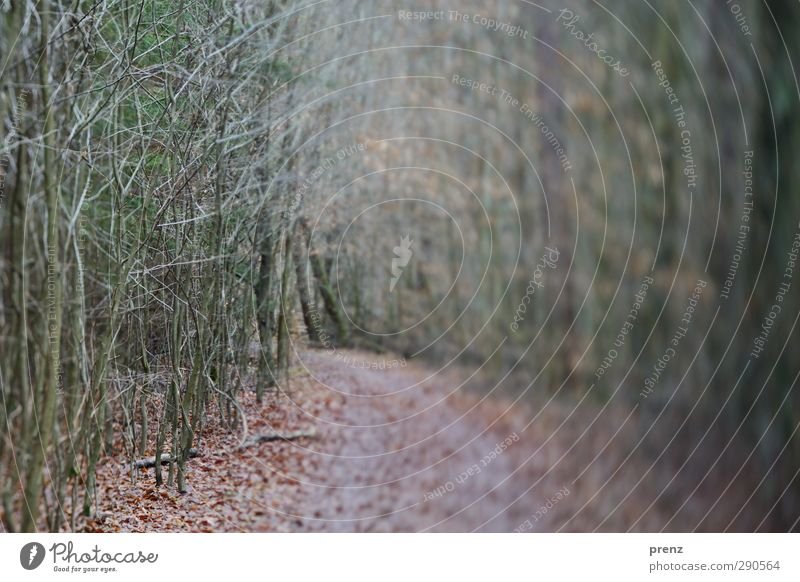 walk in the woods Environment Nature Landscape Plant Winter Tree Bushes Forest Gray Green Lanes & trails Tilt-Shift Twig Colour photo Exterior shot Deserted Day