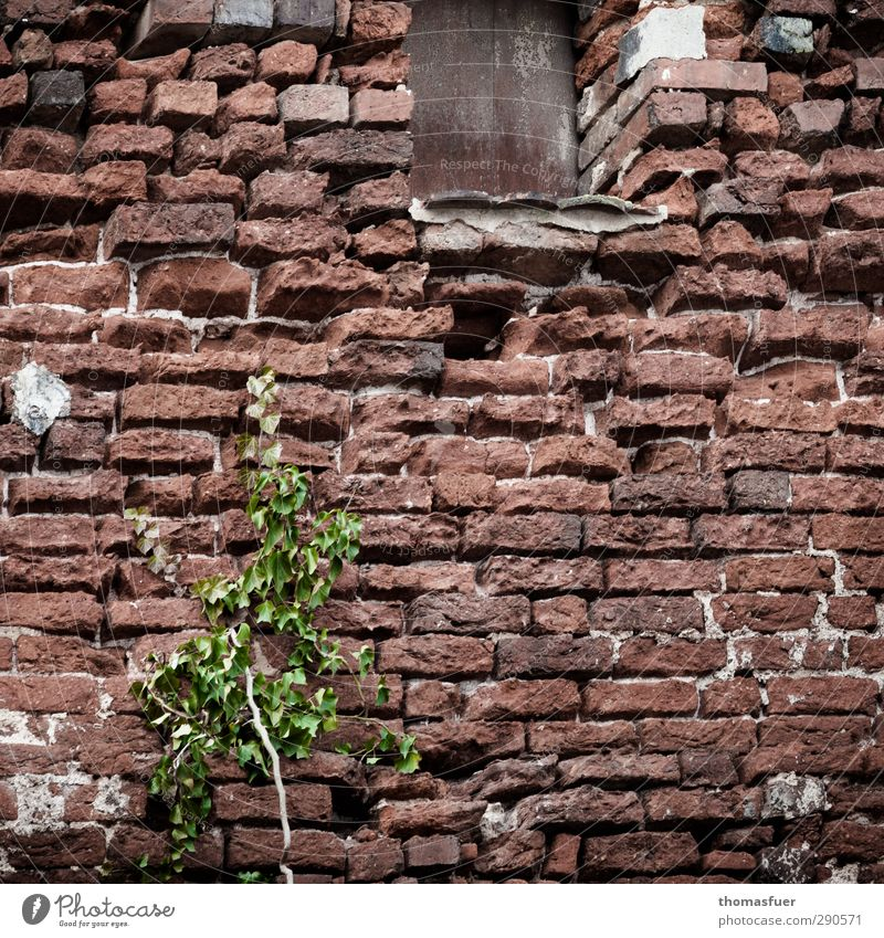 Old Green City Plant House (Residential Structure) Window Wall (building) Senior citizen Wall (barrier) Architecture Stone Brown Growth Perspective Gloomy Hope