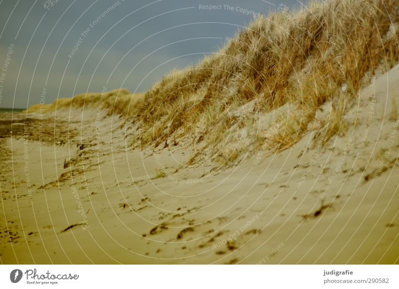 Sky Nature Vacation & Travel Beach Landscape Environment Grass Coast Sand Natural Wild Baltic Sea Darss