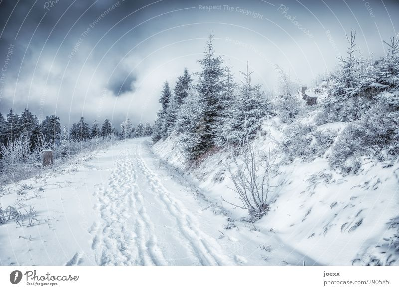 It could look like this Winter sports Nature Landscape Plant Sky Clouds Weather Bad weather Snow Forest Mountain Lanes & trails Cold Black White Colour photo